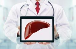 Doutor com estetoscópio em um hospital fígado na tabuleta foto de stock