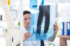 Doutor concentrado que analisa raios X Fotos de Stock Royalty Free