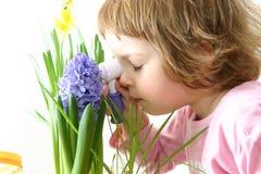 Doutor da flor imagem de stock royalty free