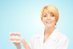 Doutor fêmea feliz com modelo das maxilas imagem de stock