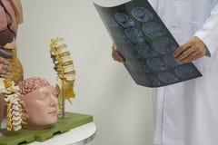 Doutor que guarda o cérebro de MRI no escritório médico imagem de stock