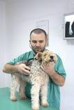 Doutor veterinário Imagem de Stock Royalty Free
