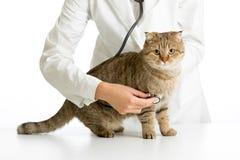 Doutor veterinário com estetoscópio e gato foto de stock