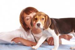 Doutor veterinário e um filhote de cachorro do lebreiro imagem de stock
