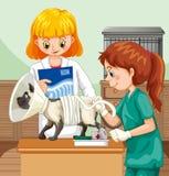 Doutor veterinário Helping um gato ilustração do vetor