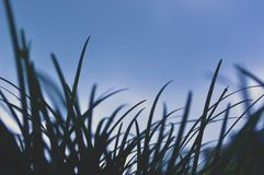 Doux d'herbe de apparence vague  images stock