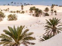 Douz, ландшафт пустыни, Сахара, Тунис, Африка Стоковые Изображения