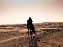 Douz, Тунис, аравийский рыцарь в пустыне на заходе солнца Стоковые Изображения RF