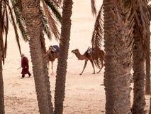 Douz, paesaggio del deserto, Sahara, Tunisia, Africa Immagine Stock