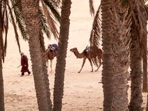 Douz, paisagem do deserto, sahara, Tunísia, África Imagem de Stock