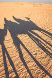 Douze,tunisia,camel and people in the sahara's desert Stock Photos