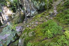 Dovbush трясет, огромные камни, утесы, мох, корни в мхе, деревья среди утесов, мох, объект, природа, дерево, лес, утес, сцена, Стоковые Изображения
