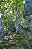 Dovbush Rocks, huge stones, rocks, moss stock photos