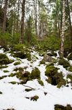 Dovbush rocks in snow forest at Carpathian mountains royalty free stock images