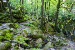 Dovbushrotsen, reusachtige stenen, rotsen, mos, wortels in het mos, bomen onder de rotsen, mos, voorwerp, aard, boom, bos, rots,  Stock Afbeeldingen