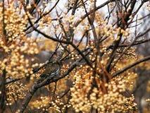 Dove в blossoming вале стоковое фото