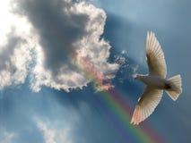 dove держал посылы стоковое изображение rf