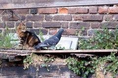 dove кота стоковое изображение