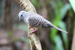 dove мирный стоковые изображения rf