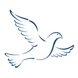 Dove. Illustration of dove drawing isolated over white background stock illustration