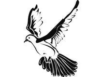 Dove royalty free illustration