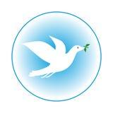 dove Стоковые Фото
