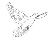 Dove. A sketch of a dove in flight Stock Images