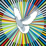 Dove. Illustration of a white dove with the colourful shine Stock Photography