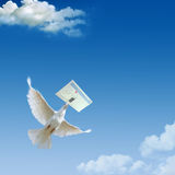 Dove. In the air with wings wide open Stock Photography
