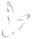 Dove. Hand drawn and artistic vector illustration