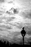 Dove. Black dove in cloudy sky sitting on the lamppost Stock Photo
