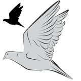 Dove. An a vector illustration of Dove . Files included: Illustrator 8 EPS  and JPG Royalty Free Illustration