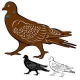 Dove. An a vector illustration of Dove . Files included: Illustrator 8 EPS  and JPG Vector Illustration