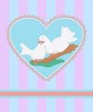 Dove-1 Photographie stock libre de droits