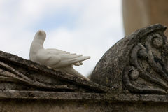 Dove. Ceramic or alabaster dove sits atop a concrete headstone in a cemetery Stock Image