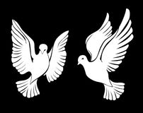 dove Стоковые Изображения