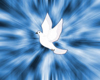 Dove. Peace dove vector illustration