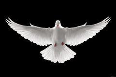 летание dove Стоковые Фото