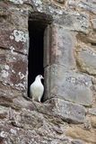 Dove In Abbey Window Royalty Free Stock Photos
