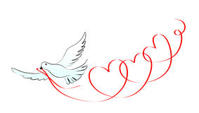 Dove. Abstract and decorative wedding element with dove Stock Photos