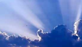 Dove against blue sky. Beautiful dramatic blue sky with dove flying Stock Photos