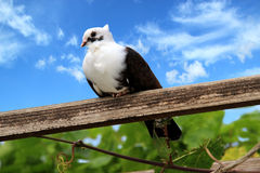 Dove against the sky Royalty Free Stock Photos