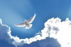 Dove in the air symbol of faith stock photo