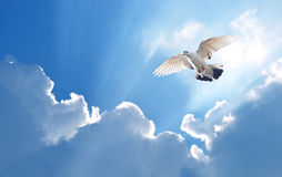 Dove in the air symbol of faith over shiny background royalty free stock photo