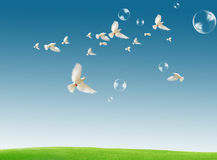 Dove in the air with wings wide open against a dra Royalty Free Stock Photos