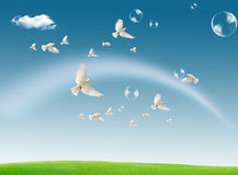 Dove in the air with wings wide open against a dra Stock Images