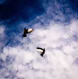 Dove in the sky with clouds. Dove in the air with wings wide open in-front of the sun Royalty Free Stock Images