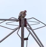 Dove on the antenna Royalty Free Stock Photo