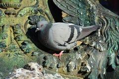 Dove as a statue Stock Photo