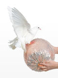 Dove and a ball - turning Earth concept Royalty Free Stock Images